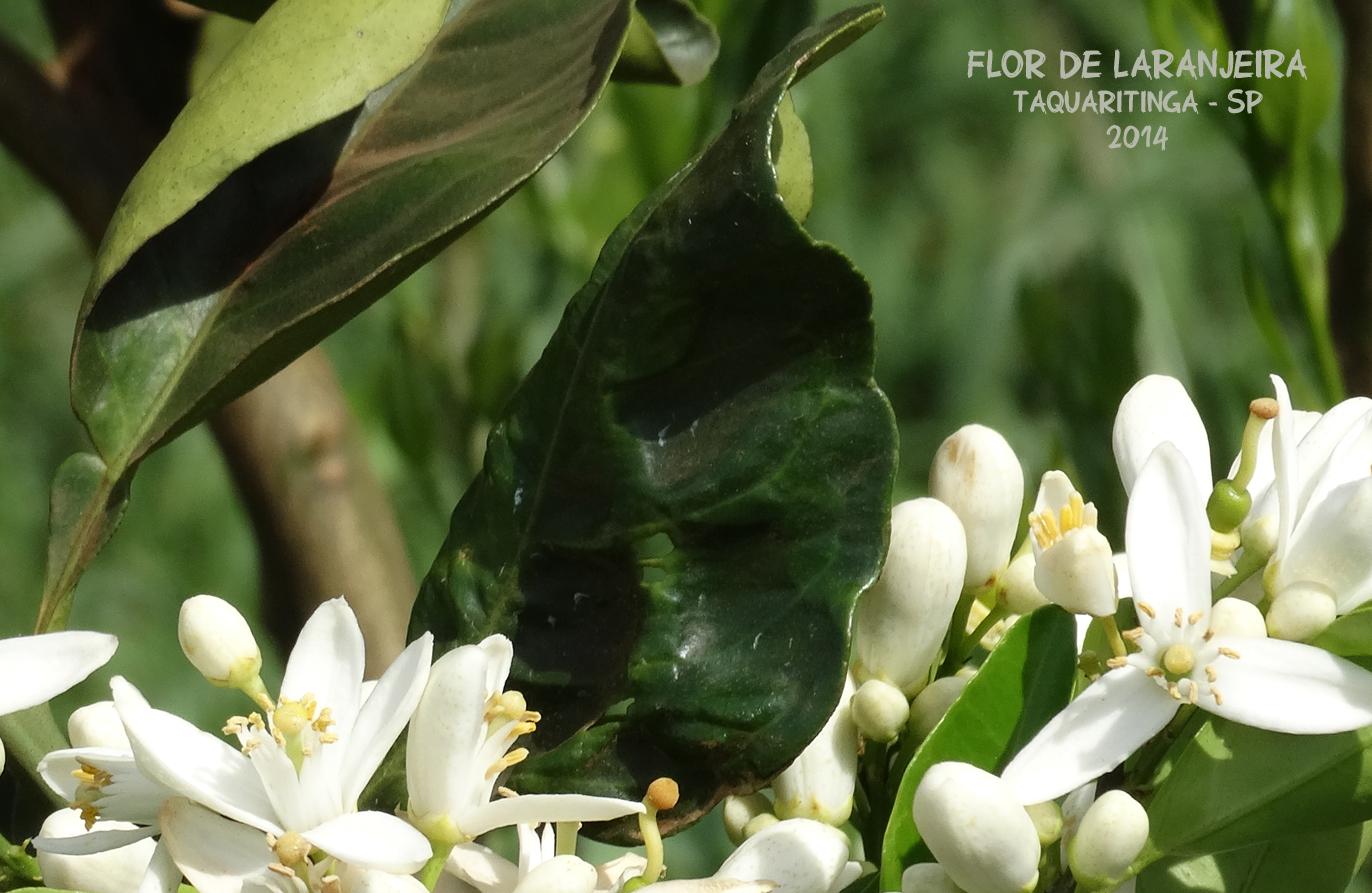 flor003