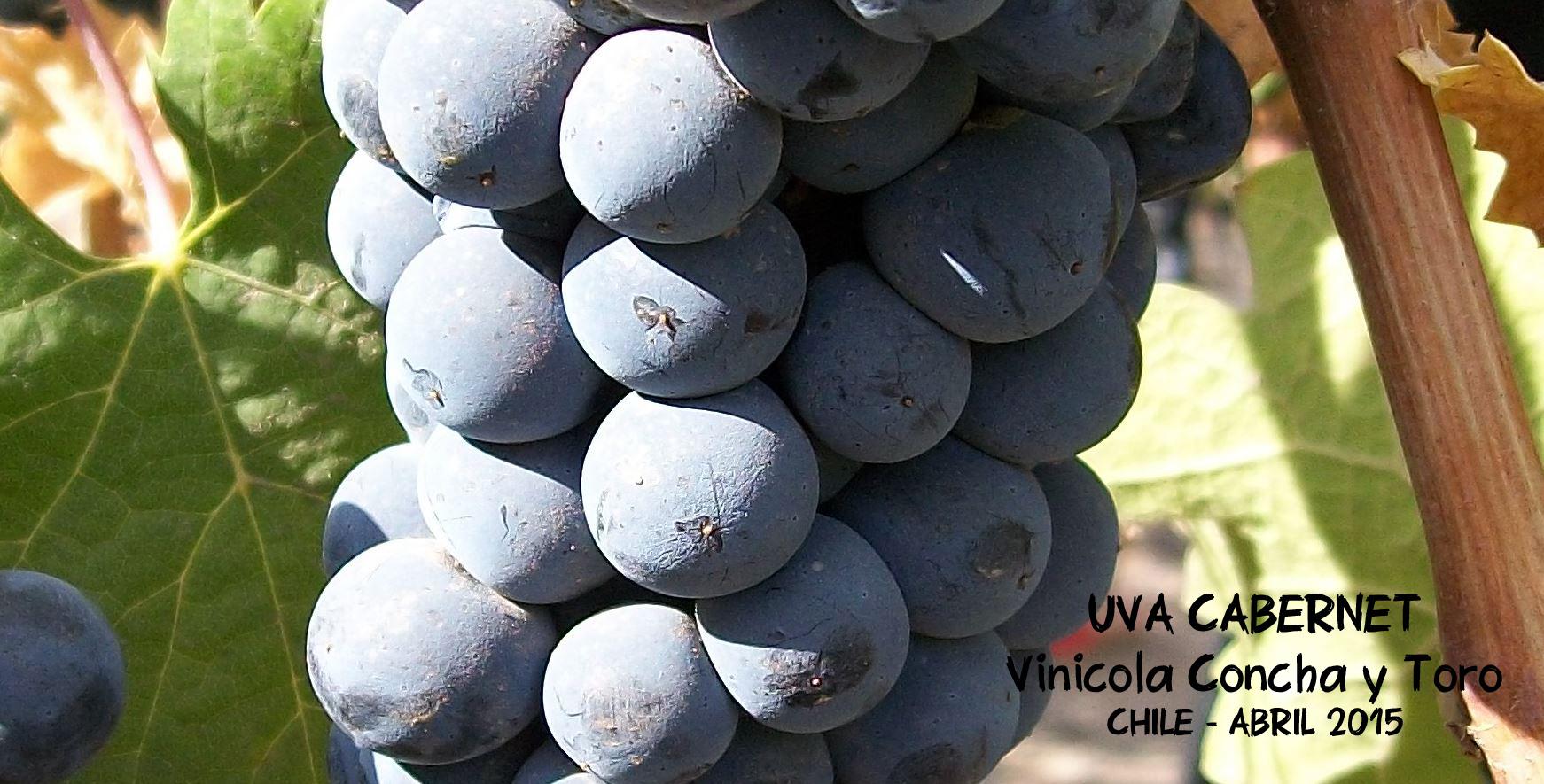uva-cabernet
